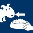 Hund Essen geben